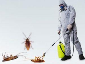 افضل شركة رش مبيدات بالدمام